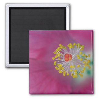 Primer del estambre de la flor del hibisco, hibisc imán para frigorifico