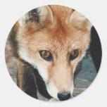 Primer del Fox Pegatina Redonda
