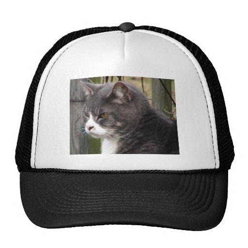 Primer del gato de Tabby negro gordo con los ojos  Gorras De Camionero