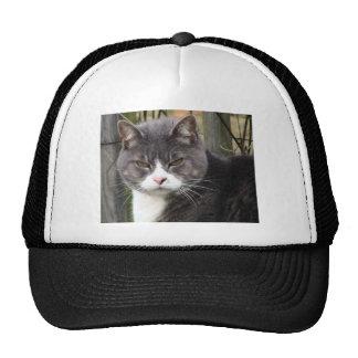 Primer del gato de Tabby negro gordo con los ojos  Gorras