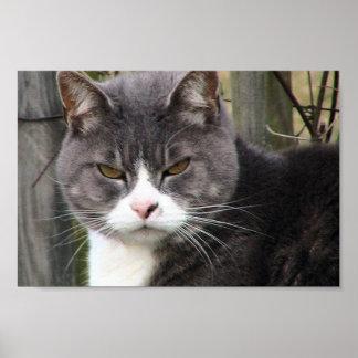 Primer del gato de Tabby negro gordo con los ojos Impresiones