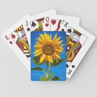 Primer del girasol baraja de póquer