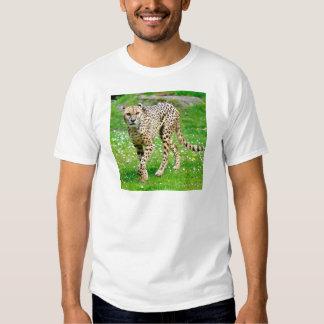 Primer del guepardo africano playera