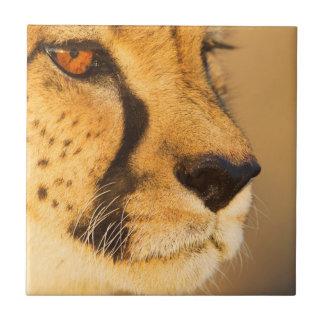 Primer del guepardo de una hembra azulejos ceramicos