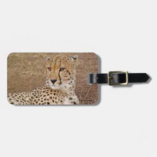 Primer del guepardo etiquetas para maletas
