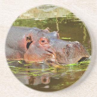Primer del hippopotamus en agua posavaso para bebida