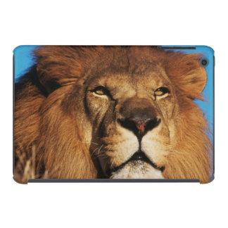 Primer del león africano funda de iPad mini