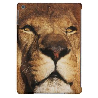 Primer del león africano funda para iPad air