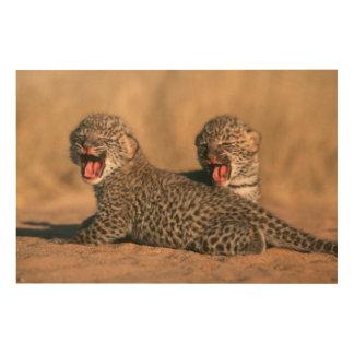 Primer del leopardo recién nacido (Panthera Cuadros De Madera