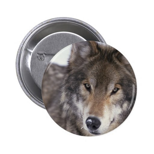Primer del lobo pin