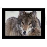 Primer del lobo tarjetas