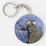Primer del macaw del jacinto llaveros personalizados