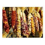 Primer del maíz indio colorido en tienda adentro tarjeta postal