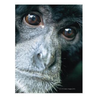 Primer del mono tarjeta postal