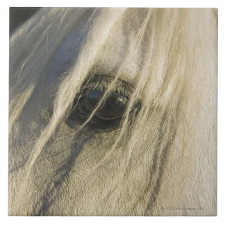 Primer del ojo del caballo azulejo cuadrado grande