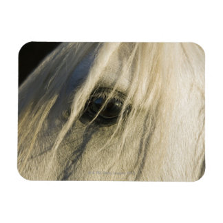 Primer del ojo del caballo imán