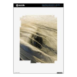 Primer del ojo del caballo iPad 3 skin