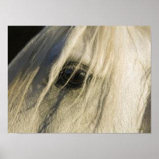 Primer del ojo del caballo impresiones