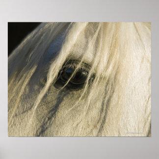Primer del ojo del caballo poster