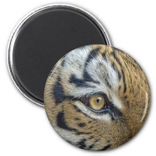 Primer del ojo del tigre imán redondo 5 cm
