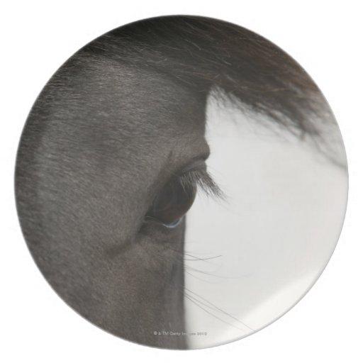Primer del ojo y del pelo del caballo plato de comida