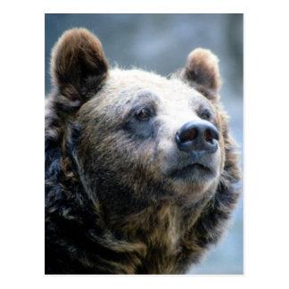 Primer del oso de Brown Postal
