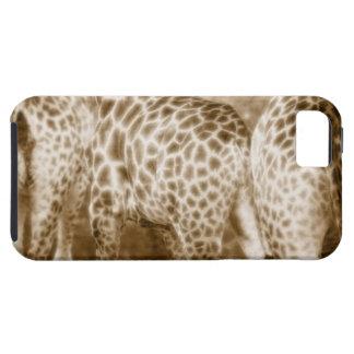 Primer del parque nacional de Kruger de las jirafa iPhone 5 Fundas