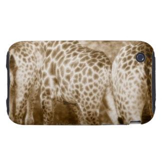 Primer del parque nacional de Kruger de las jirafa Tough iPhone 3 Protectores
