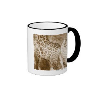 Primer del parque nacional de Kruger de las jirafa Tazas De Café