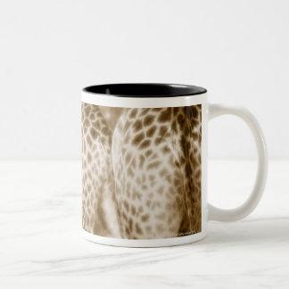 Primer del parque nacional de Kruger de las jirafa Taza De Café