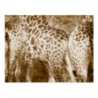 Primer del parque nacional de Kruger de las Postal