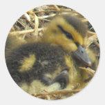 Primer del pato del bebé etiqueta redonda