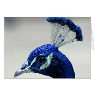 Primer del pavo real tarjeta de felicitación