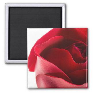 Primer del rosa rojo imán cuadrado