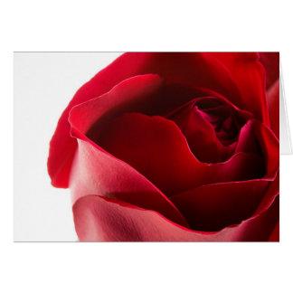 Primer del rosa rojo tarjeta de felicitación