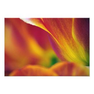 Primer del superficie inferior de la flor del tuli fotografía