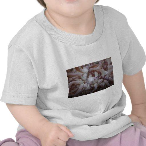 Primer del tentáculo de la anémona de mar camisetas