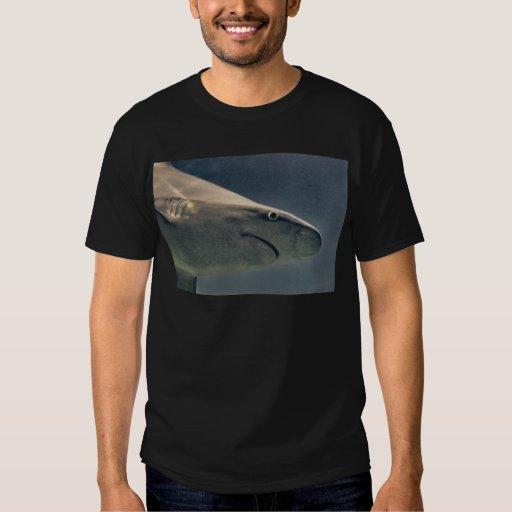 Primer del tiburón playera