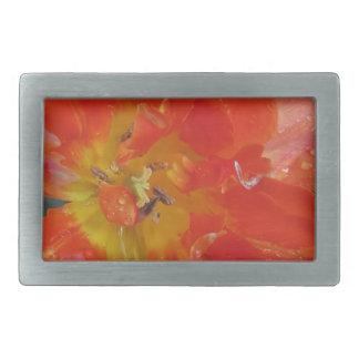 Primer del tulipán anaranjado con las gotitas en hebilla cinturón rectangular