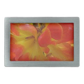 Primer del tulipán anaranjado con las gotitas en hebillas de cinturón rectangulares