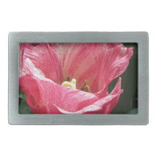 Primer del tulipán rayado en primavera hebilla de cinturón rectangular