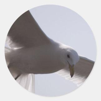 Primer del vuelo de la gaviota de arriba etiquetas redondas
