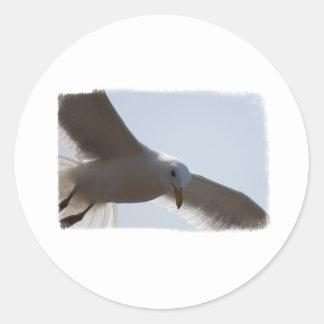 Primer del vuelo de la gaviota etiquetas redondas