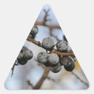 Primer en bayas negras con un fondo blured calcomanía de triangulo