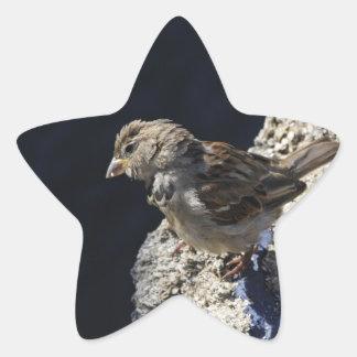 Primer en un pequeño gorrión en una roca calcomania forma de estrella personalizada