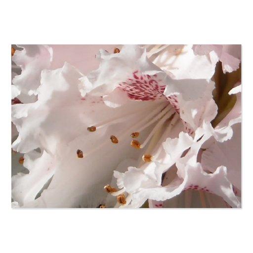 Primer estupendo del rododendro del pétalo rosado  tarjetas de visita grandes