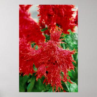 Primer floral del flor de la flor roja tropical posters