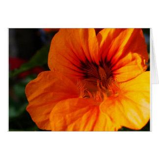 primer glorioso de la cabeza de flor tarjeta de felicitación