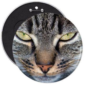 Primer gris de la cara del gato