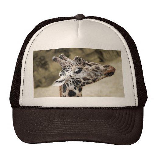 Primer lindo de la jirafa de la cabeza y del cuell gorros bordados